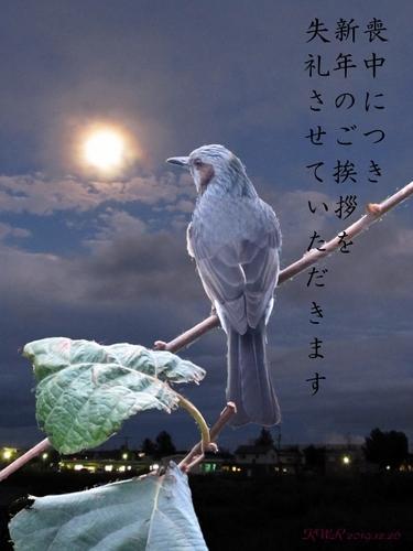 夜想曲(喪中用) (480x640).jpg